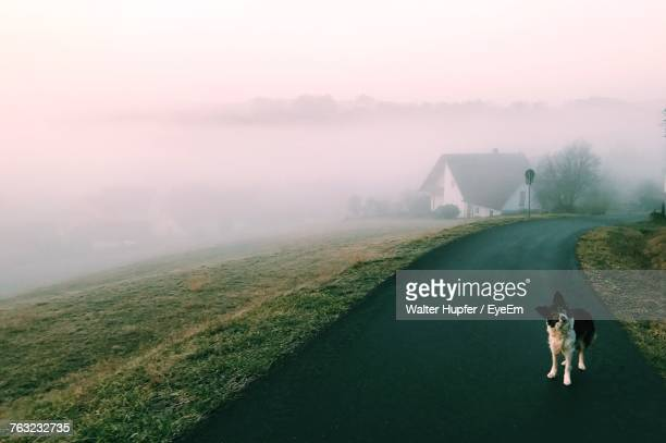 Dog On Road Against Sky During Foggy Weather