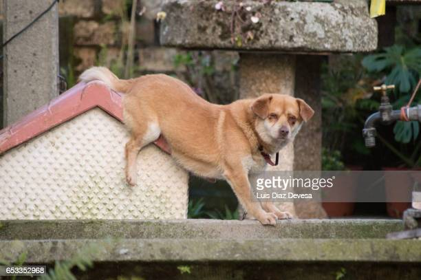dog on roof - arbusto stock pictures, royalty-free photos & images
