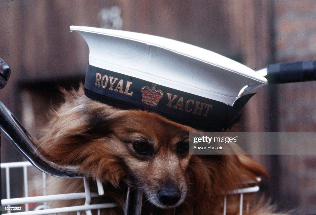 Dog on Royal Yacht Britannia