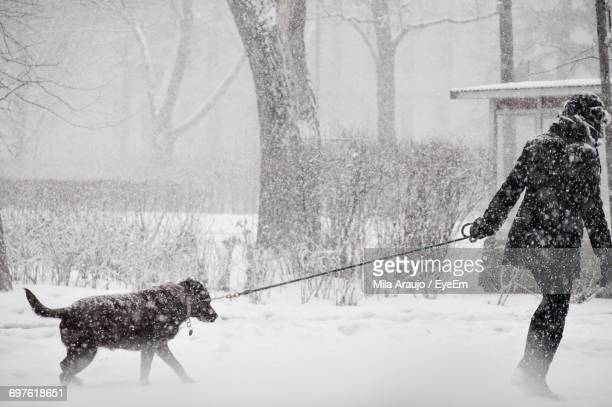 Dog On Snow Covered Bare Tree