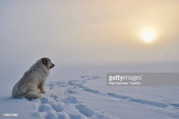 Dog On Snow Covered Field Against Sky