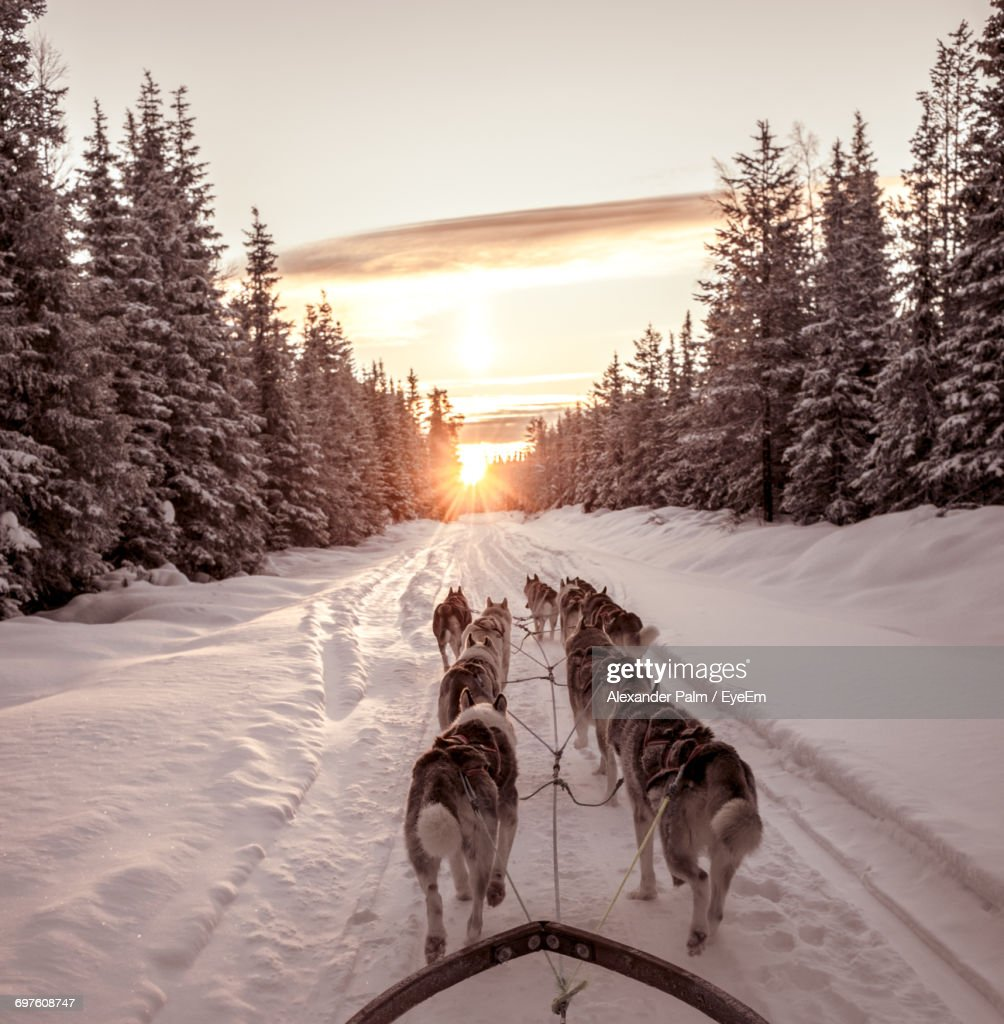 Dog On Snow Covered Landscape During Sunset : Stock Photo