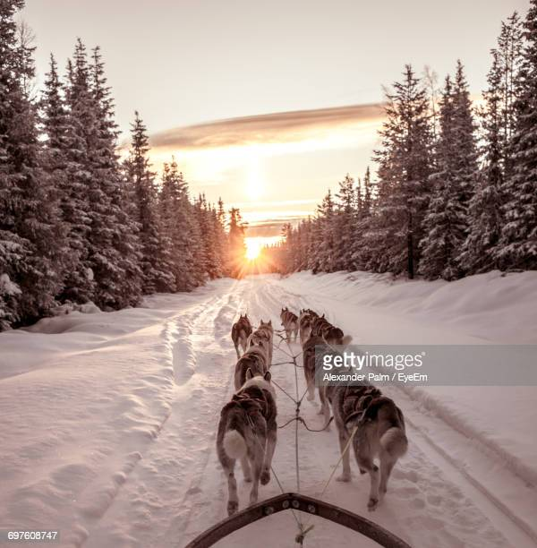 Dog On Snow Covered Landscape During Sunset
