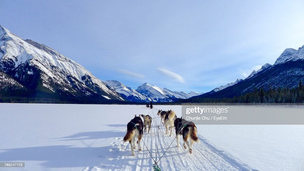Dog On Snowcapped Mountain Against Sky : Stock Photo