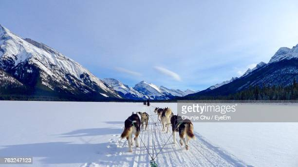 dog on snowcapped mountain against sky - sled dog stock pictures, royalty-free photos & images
