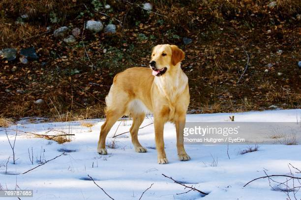 Dog On Snowy Field During Winter