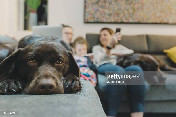 dog on sofa with family - pets stock pictures, royalty-free photos & images