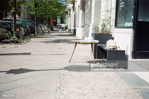 dog on street - prenzlauer berg stock photos and pictures