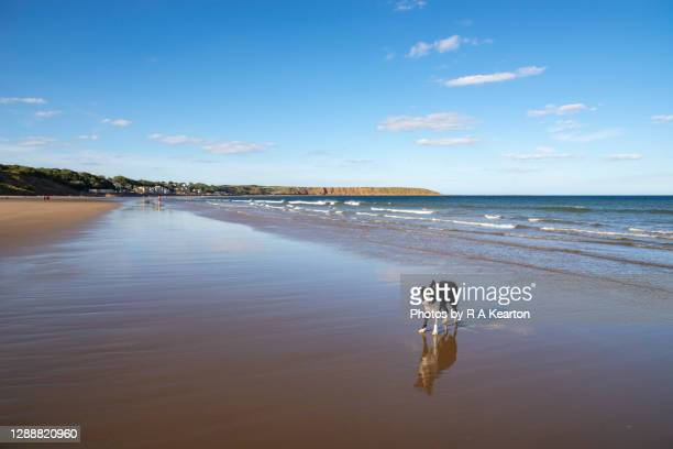 dog on the beach at filey, north yorkshire - horizon stock pictures, royalty-free photos & images