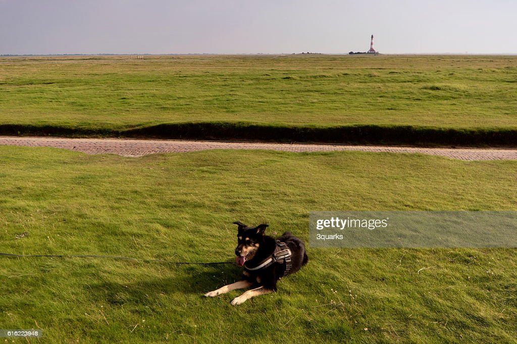 Dog on the Beach : Stockfoto