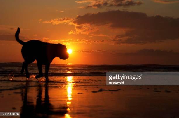dog on the beach - noord holland stockfoto's en -beelden