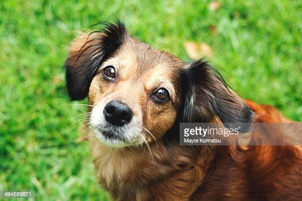 dog on the grass - alcazar de san juan - fotografias e filmes do acervo