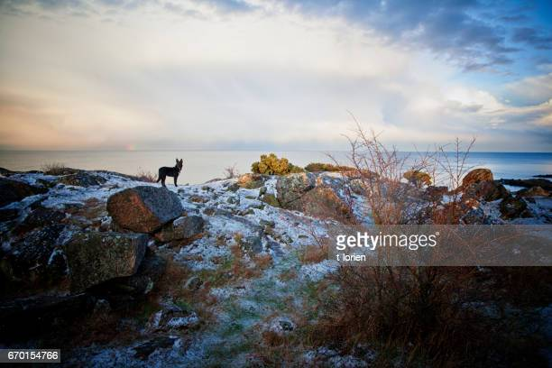 Dog on the rocks in wintertime.