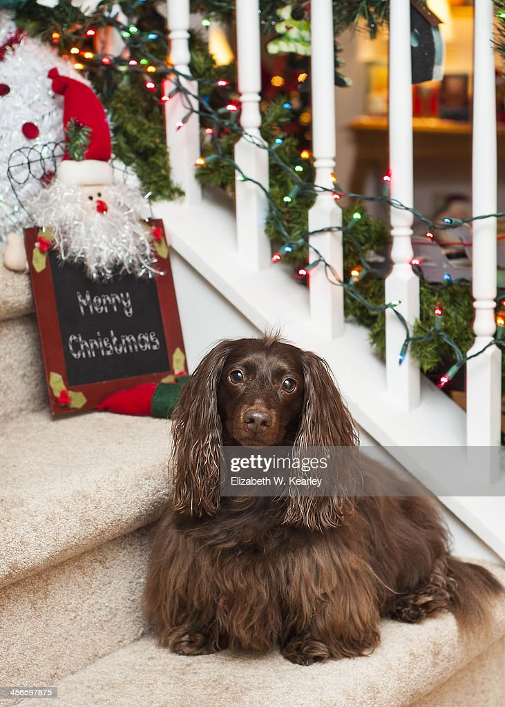 Dog on the stairs : Stock Photo