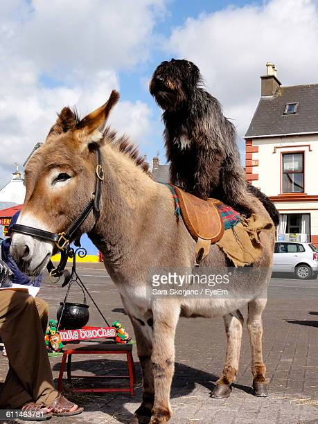 Dog On Top Of Donkey At Street
