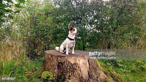 Dog On Tree Stump At Forest