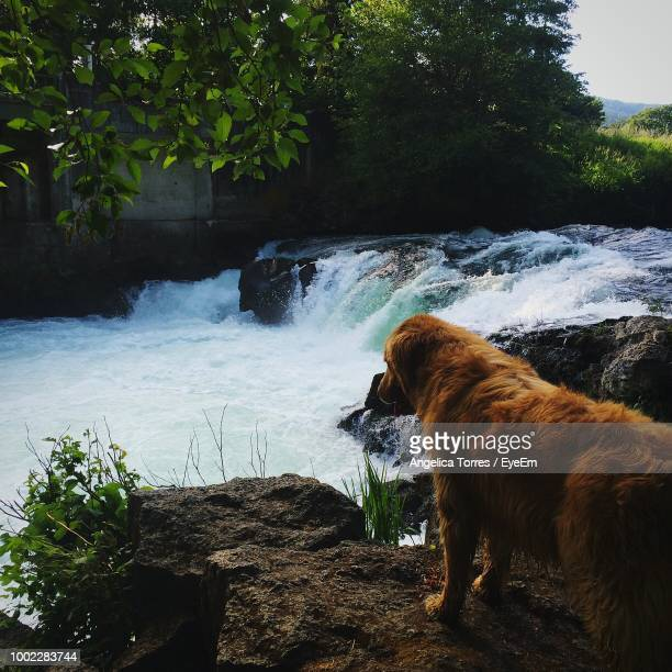 Dog On Water Against Trees
