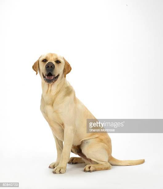 Dog on White 60