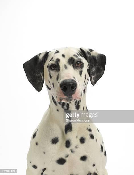 Dog on White 93