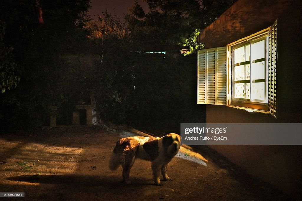 Dog Outside Of House : Stock Photo