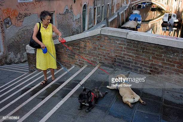 A dog owner and her two pet pugs with coloured leads who refuse to go any further while crossing a small bridge over a narrow canal in Dorsoduro a...