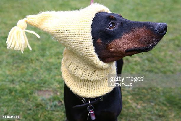 Dog owner arrives with his Manchester Terrier on the first day of the Crufts dog show at the National Exhibition Centre in Birmingham, central...