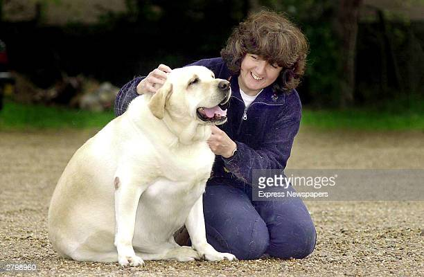 Dog owner Becky Jones pets four yearold labrador Chubby Charlie in Northfield Birmingham United Kingdom October 24 2001 Chubby Charlie is forced to...