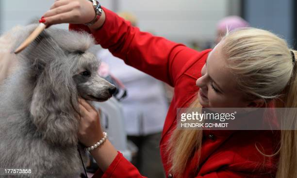 Dog owner Eva Schmidt prepares her poodle for a competition during the 'Dog Cat' pet fair in Leipzig eastern Germany on August 24 2013 The fair is...