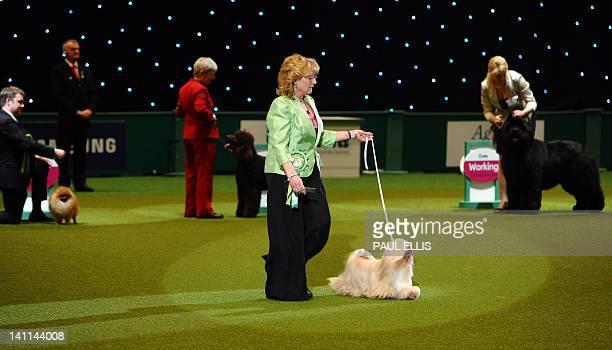 Dog owner Margaret Anderson and Elizabeth, a Lhasa Apso from Coventry walk before winning the Best in Show category of the Crufts Dog Show at The...