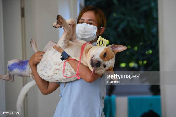 Dog owner take her dog after being undergoing anesthesia for neutering at The Veterinary Council of Thailand on August 26, 2020 in Bangkok, Thailand....