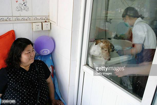 A dog owner watches as her pet is given a bath at a canine beauty parlour May 22 2004 in the Chinese capital Beijing The increase in pet ownership in...