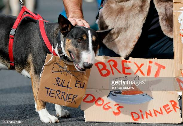 TOPSHOT Dog owners and their pets gather before participating in a proEU antiBrexit march calling for a People's Vote on Brexit in central London on...
