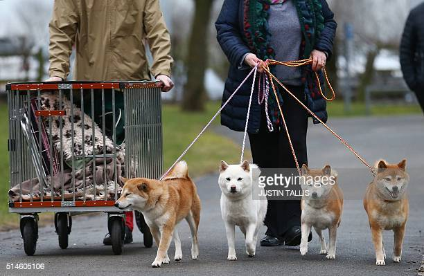 Dog owners arrive with Japanese Shiba Inu dogs on the first day of the Crufts dog show at the National Exhibition Centre in Birmingham central...