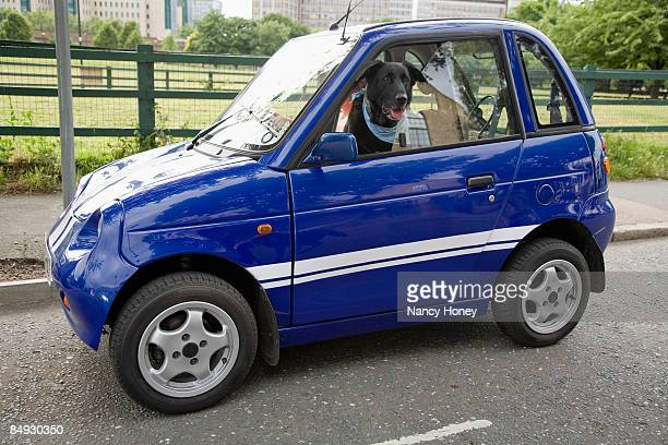 Dog panting in electric car