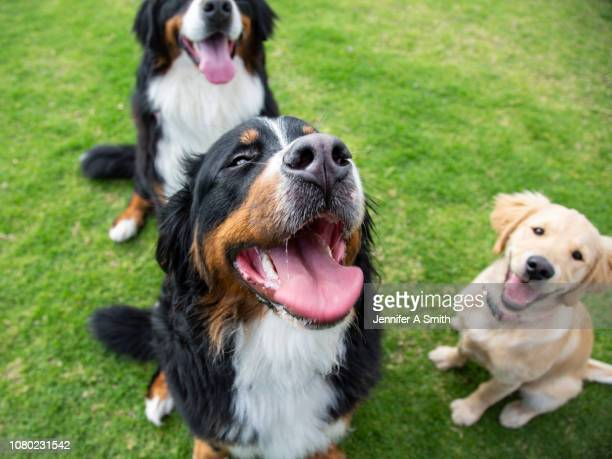 dog park - dog stock pictures, royalty-free photos & images
