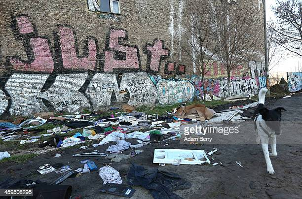 A dog passes trash seen strewn outside the ruins of a former ice factory known locally as the Eisfabrik on December 27 2013 in Berlin Germany The...