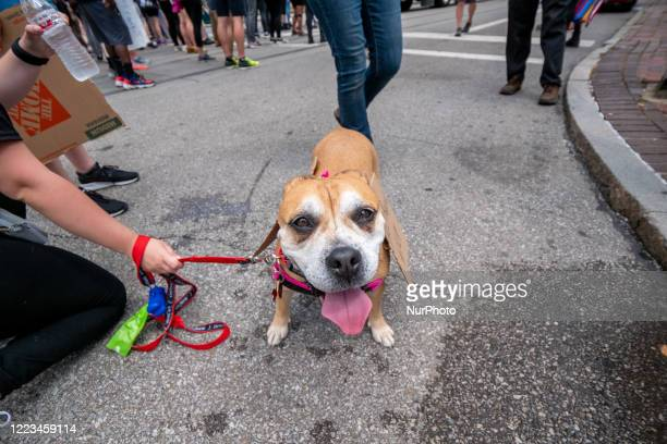 A dog pauses for a water break at the Hamilton County Courthouse during a Black Lives Matter rally and march calling for racial justice following the...