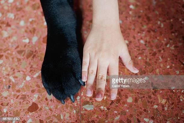 dog paw and kid hand together