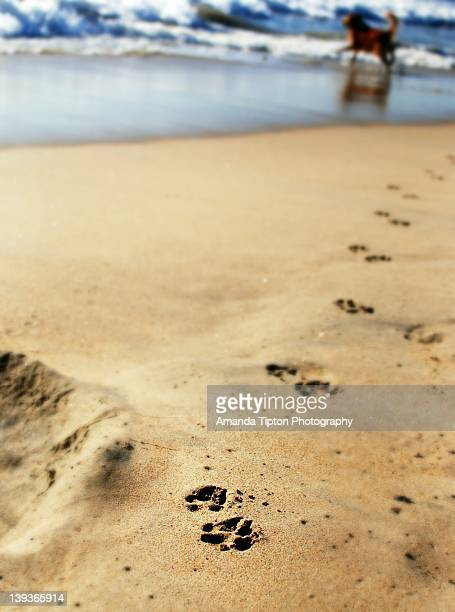 Dog paw print in sand beach