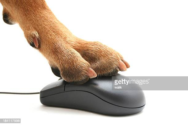 A dog paw pushing a computer mouse backwards