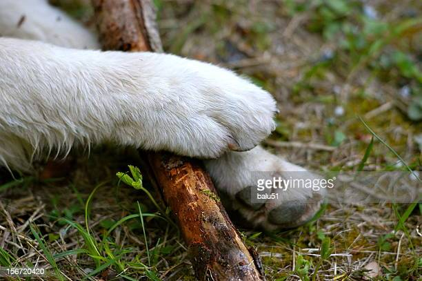 Dog paws with stick