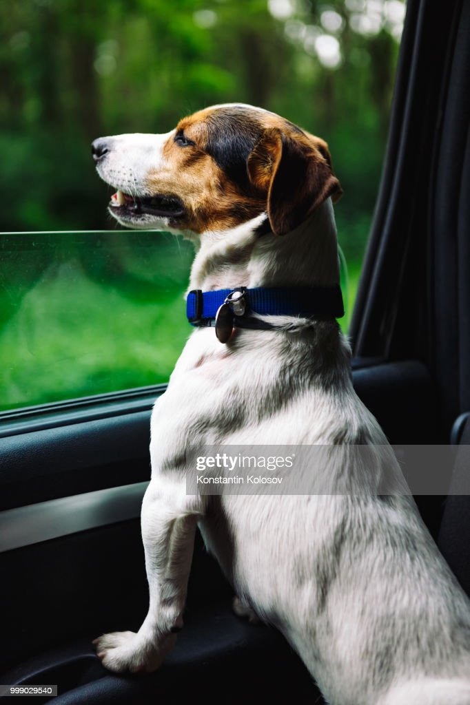 dog peeking in from the open window of the car ストックフォト