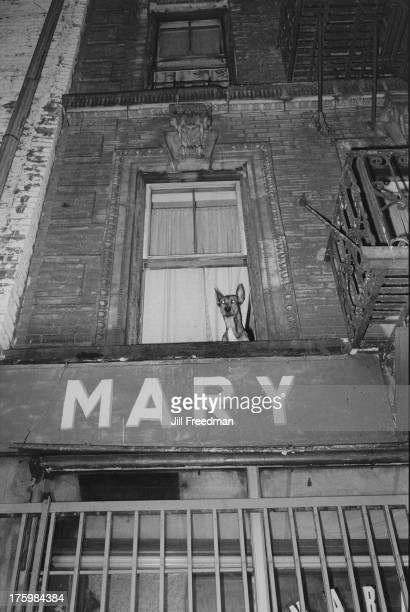 A dog peering out of a window above a sign reading 'Mary' in Little Italy Lower East Side New York 1981
