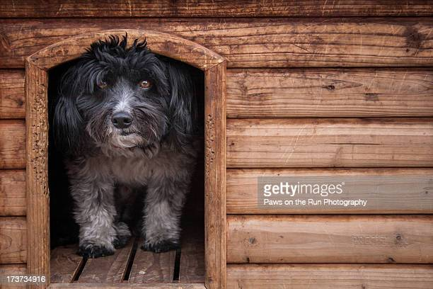 Dog Peering out of dog house