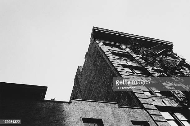 A dog peers down from the roof of a tenement block in Little Italy New York 1981
