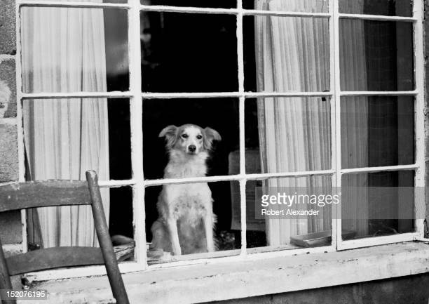 A dog peers out the front window of a home in rural southwest Virginia 5104602RA_Appalachia40jpg