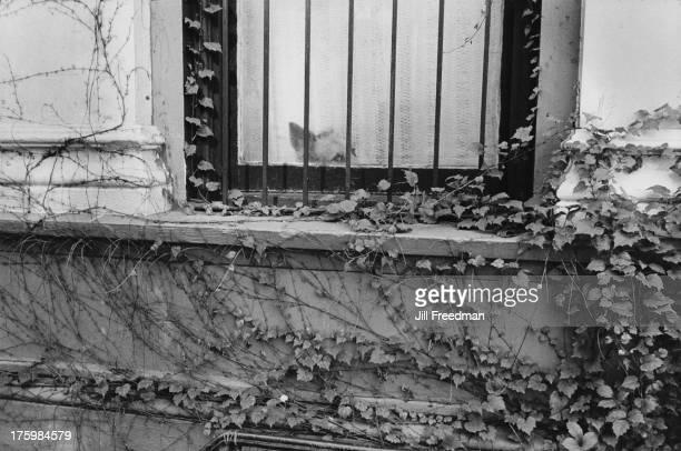 A dog peers through a window in Washington Square Greenwich Village New York 1977