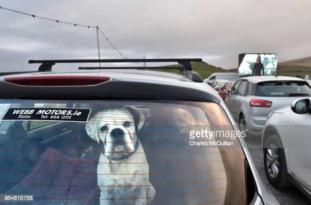 A dog peers through the back window of a car at a drive in movie showing of Star Wars The Last Jedi with a view of the Skellig islands on May 4 2018...