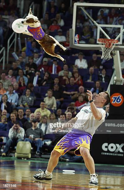 A dog performs during halftime of the game between the New York Knicks and the Phoenix Suns during the game at America West Arena on February 14 2003...