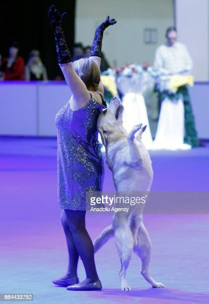 A dog performs with his owner during the International Dog Shows of all breeds 'Kievan Rus 2017' and 'The Crystal Cup of Ukraine 2017' in Kiev...